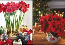 χριστουγεννιάτικα φυτά