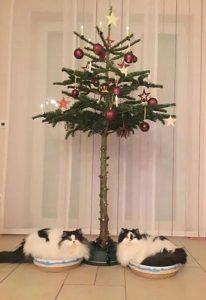 στολισμός δέντρου γάτες Χριστούγεννα