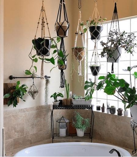 Φυτά μπάνιου για τον τοίχο του μπάνιου