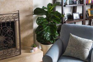 φυτά εσωτερικού χώρου που μειώνουν το άγχος