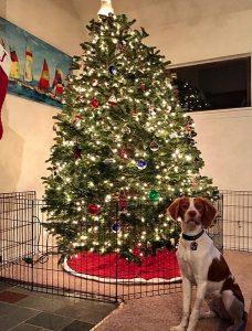 σπίτι σκύλος χριστουγεννιάτικο δέντρο