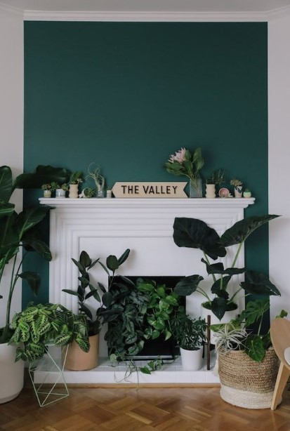 τζάκι γεμάτο φυτά μέσα και πάνω