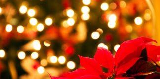 χριστουγεννιατικη ποινσεττια