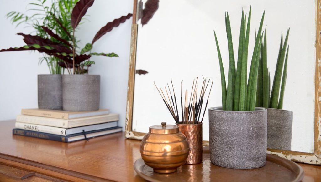 φυτά εσωτερικού χώρου για ένα χαρούμενο σπίτι
