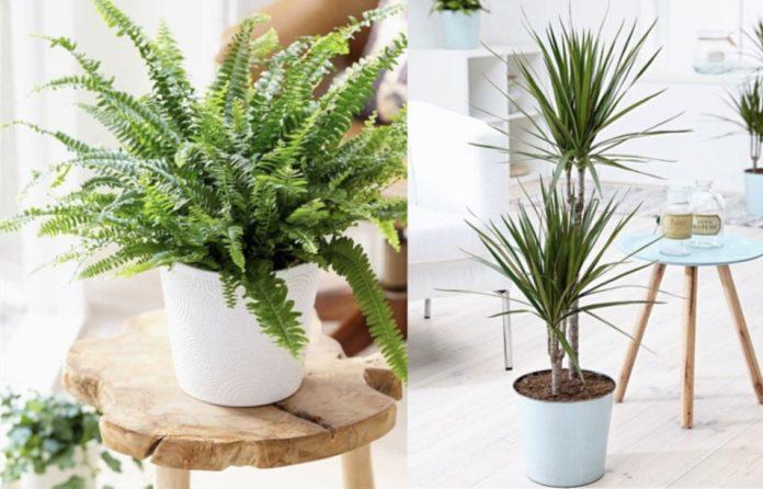 φυτα για σκοτεινα σημεια