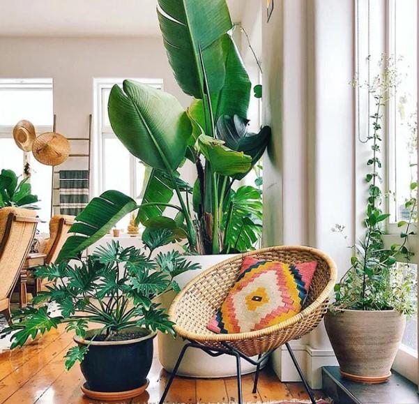 φυτά εσωτερικού χώρου για boho δωμάτιο