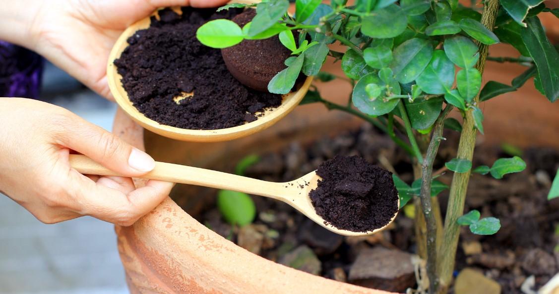 καφές ξύλινη κουτάλα φυτό φυσικοί τρόποι ενισχύσεις χώμα