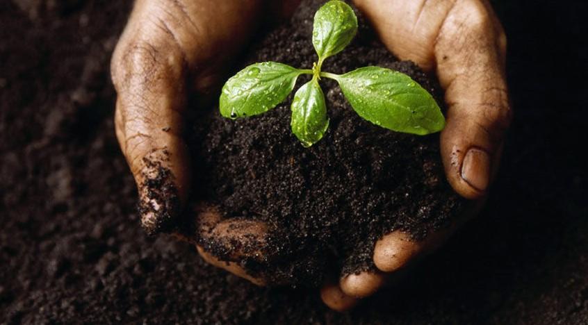 χούφτα χώμα φυτό φυσικοί τρόποι ενισχύσεις χώμα