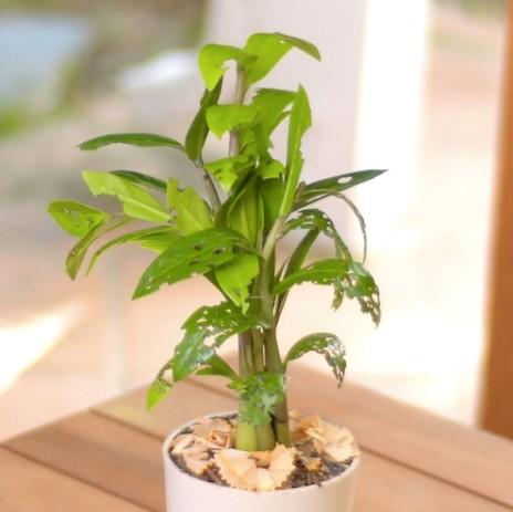 κόλπο για να απωθήσεις τα έντομα από τα φυτά σου