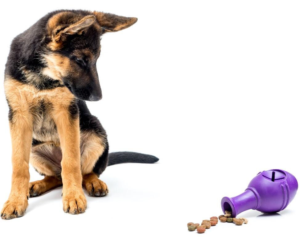 πως να εκπαιδεύσεις τον σκύλο σου