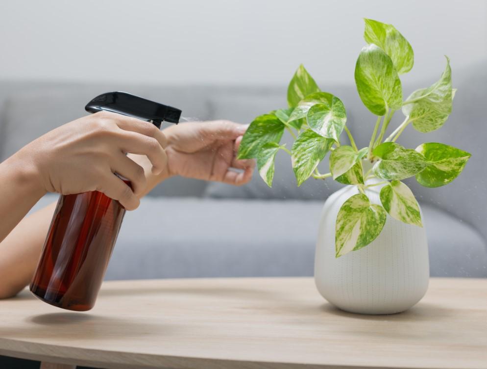 εύκολο λίπασμα για τα φυτά με λεμόνι, ζάχαρη και χλωρίνη