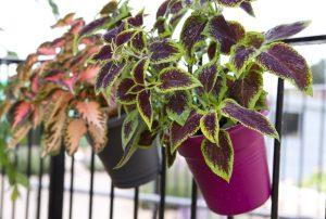 φυτά στο μπαλκόνι
