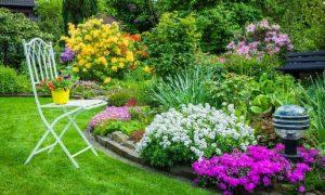 φυτα κηπου