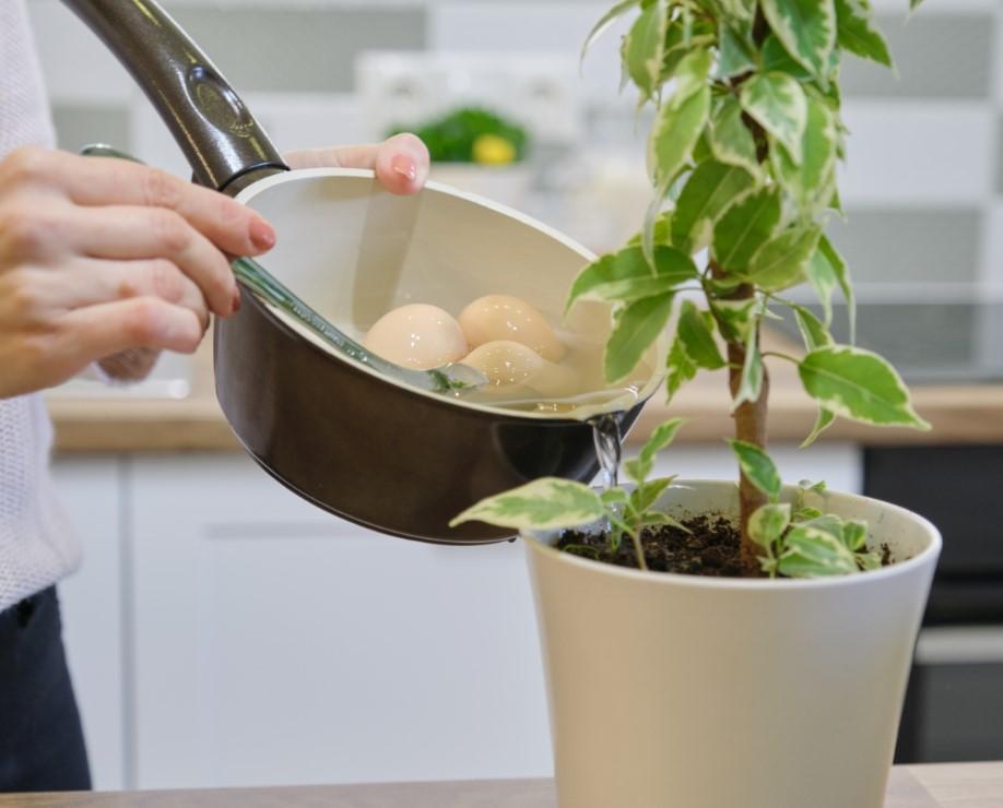 ενίσχυσε το χώμα του φυτού σου με το νερό από αυγά