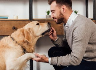 πως να μάθεις νέα κόλπα και να ψυχαγωγήσεις το σκύλο σου