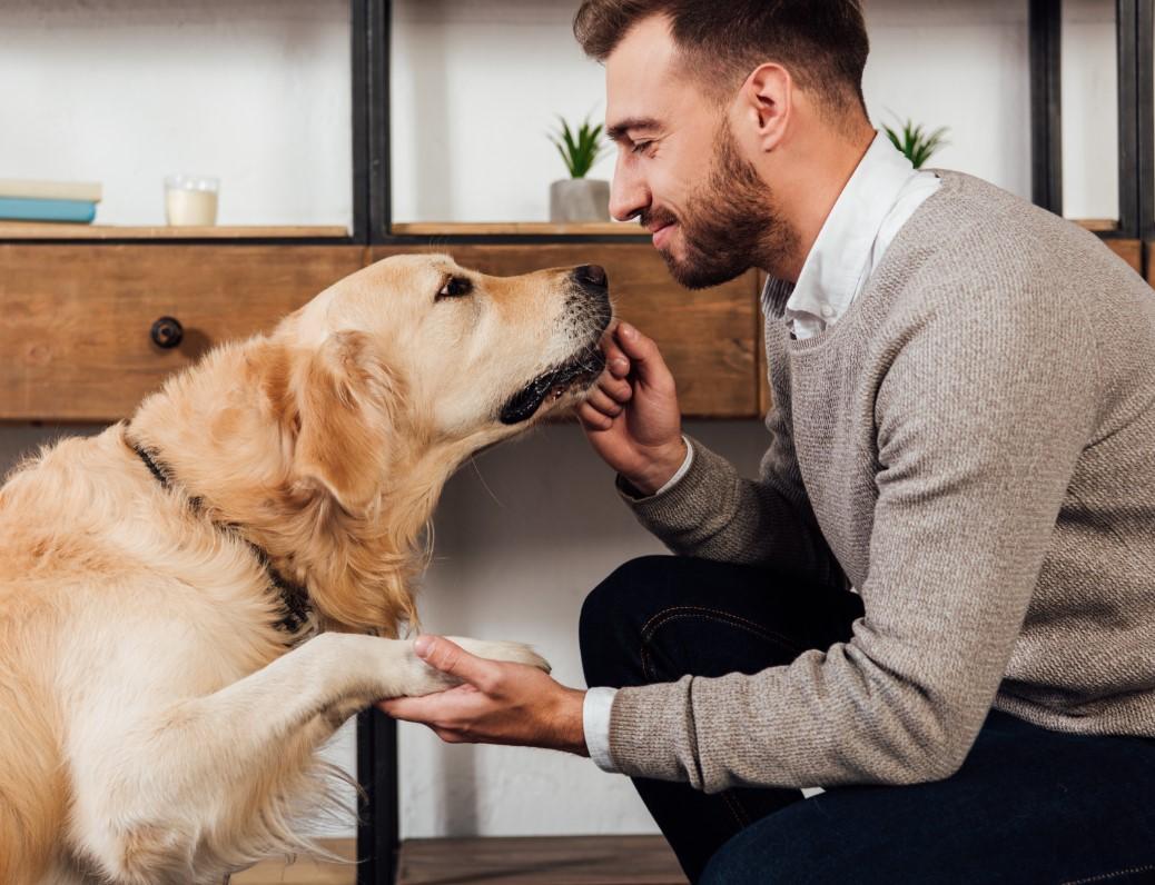 πως να μάθεις νέα κόλπα στο σκύλο σου