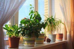 όμορφα φυτά εσωτερού χώρου