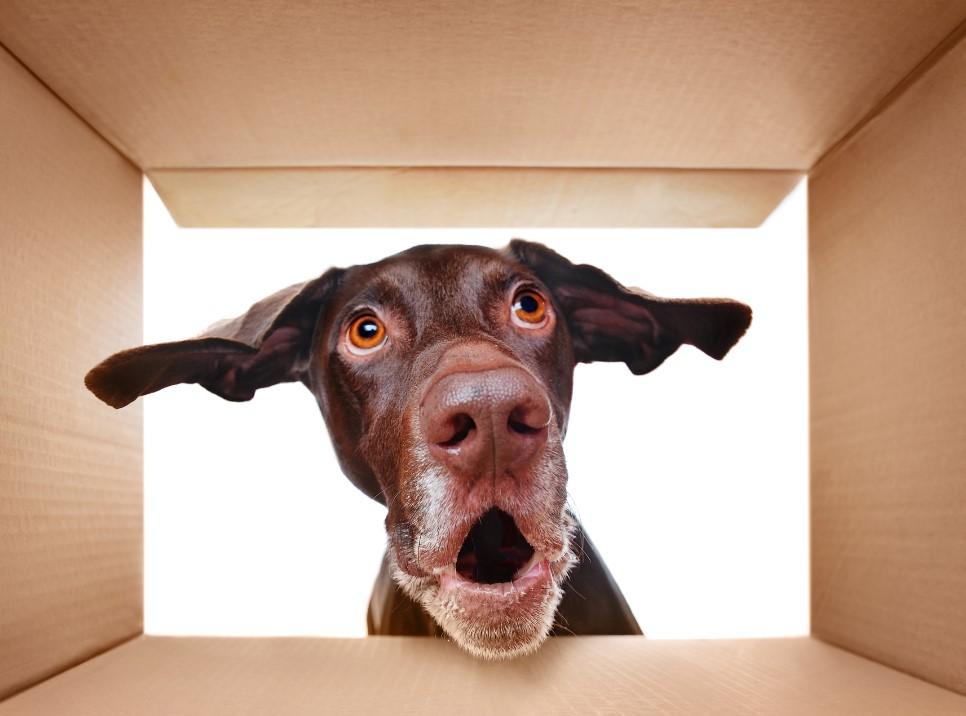 τρόποι για να διασκεδάσεις το σκύλο στο σπίτι
