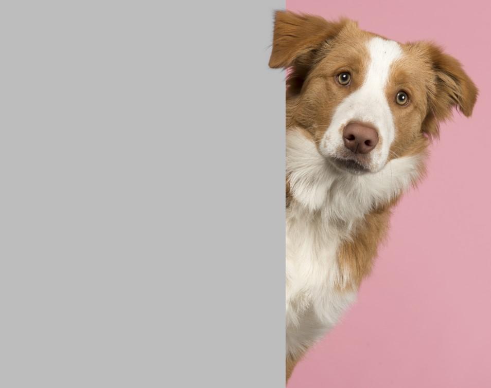 Πως να παίξεις κρυφτό με το σκύλο σου