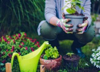 πότισμα φυτών για αρχάριους