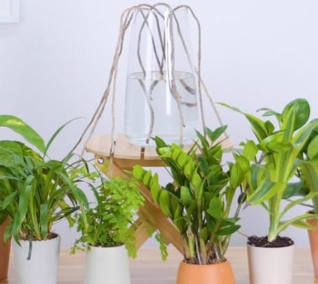 Κόλπα για να ποτίσεις τα φυτά σου ενώ λείπεις για διακοπές