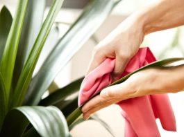 χέρι καθαρίζει με πανί φύλλα φυτού