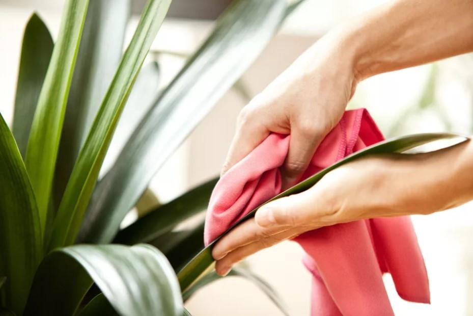 χέρι καθαρίζει με πανί φύλλα φυτού πράγματα ξεχνάς καθαρίσεις