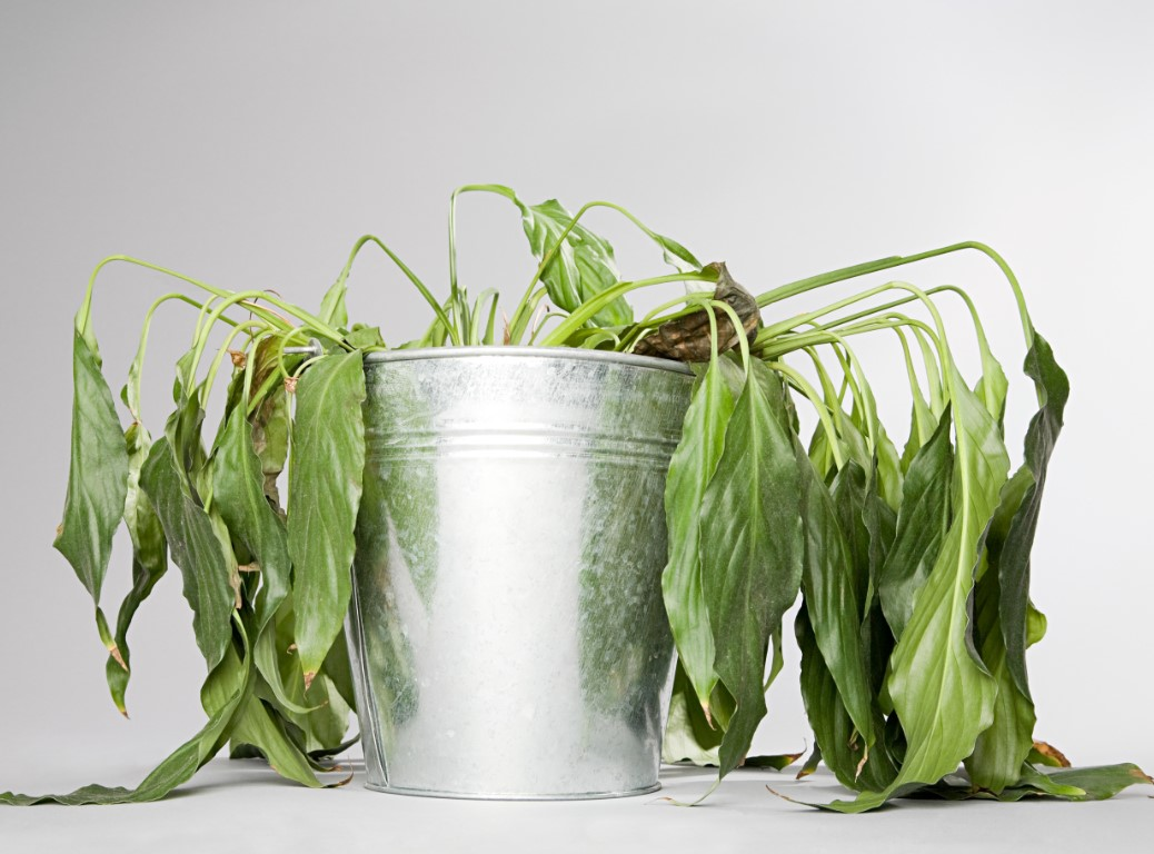 φυσικοί τρόποι για να ζωντανέψεις τα φυτά σου