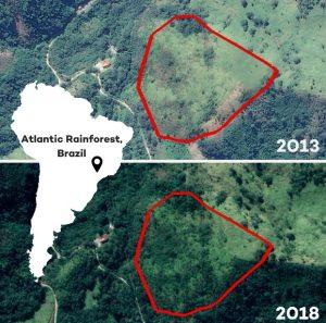 ecosia δεντροφύτευση στη βραζιλία