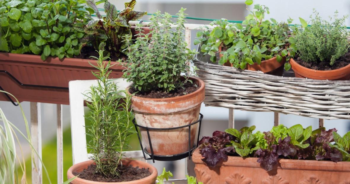 γάστρες βότανα μπαλκόνι