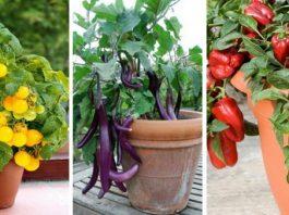 φύτεμα κήπος λαχανικά σε γλάστρες