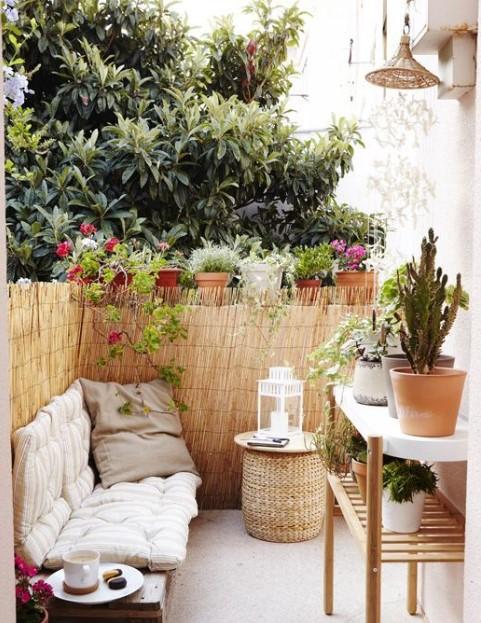 μπαλκόνι καλαμωτή φυτά