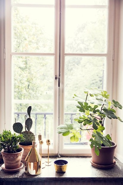 παράθυρα φυτά εσωτερικού χώρου