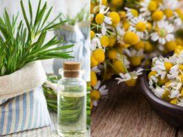 θεραπευτικά φυτά που μπορείς να καλλιεργήσεις στο σπίτι