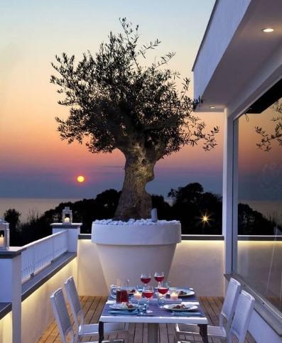 μεγάλη γλάστρα με δέντρο στο μπαλκόνι