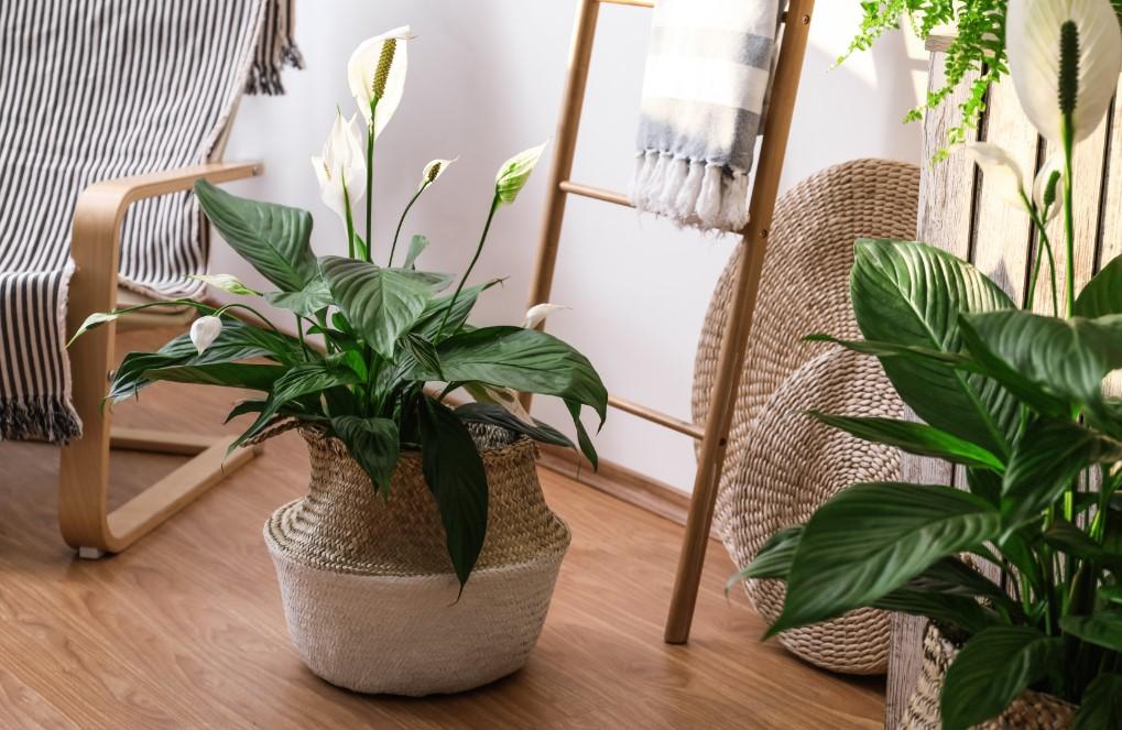 Διακόσμηση με φυτά και χρωματιστά λουλούδια, σκανδιναβικό στυλ