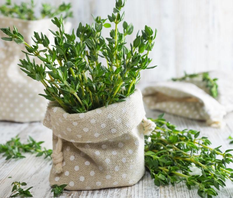 Πως να καλλιεργήσεις θυμάρι σε γλάστρα