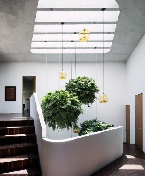 φυτά που κρέμονται από το ταβάνι
