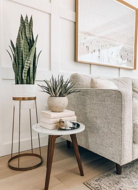 σύγχρονο κασπό φυτά καναπές