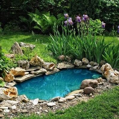λίμνη κήπος φυτά διακόσμηση κήπο