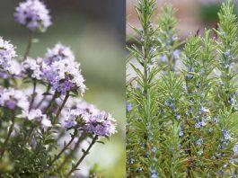 βότανα για τον κήπο σου