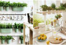 κήπο με φυτά στην κουζίνα