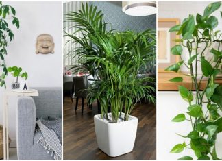 φυτά για το σαλόνι