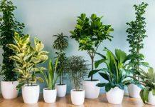 Συμβουλές για υγιή φυτά
