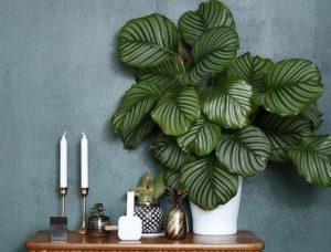 καλαθέα φυτά για το σαλόνι