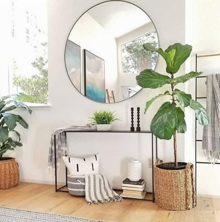 στρογγυλός καθρέπτης φυτό