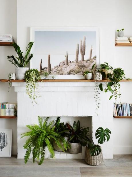 τζάκι γλάστρα φυτά
