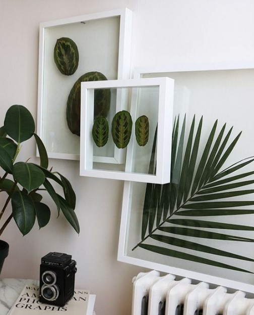 diy διακοσμητικές κορνίζες με φυτά