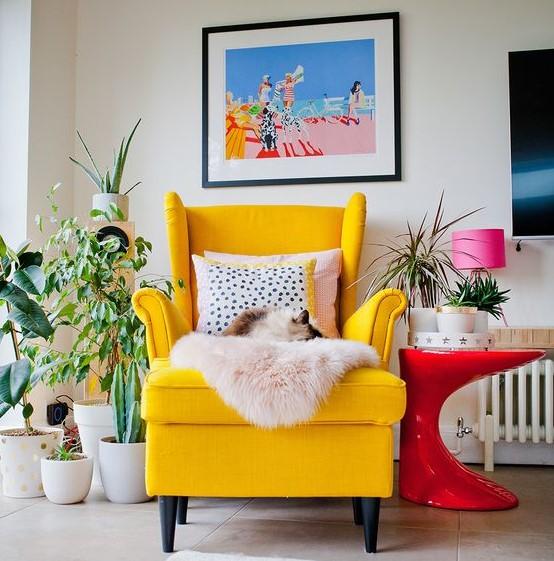 κίτρινη πολυθρόνα φυτά