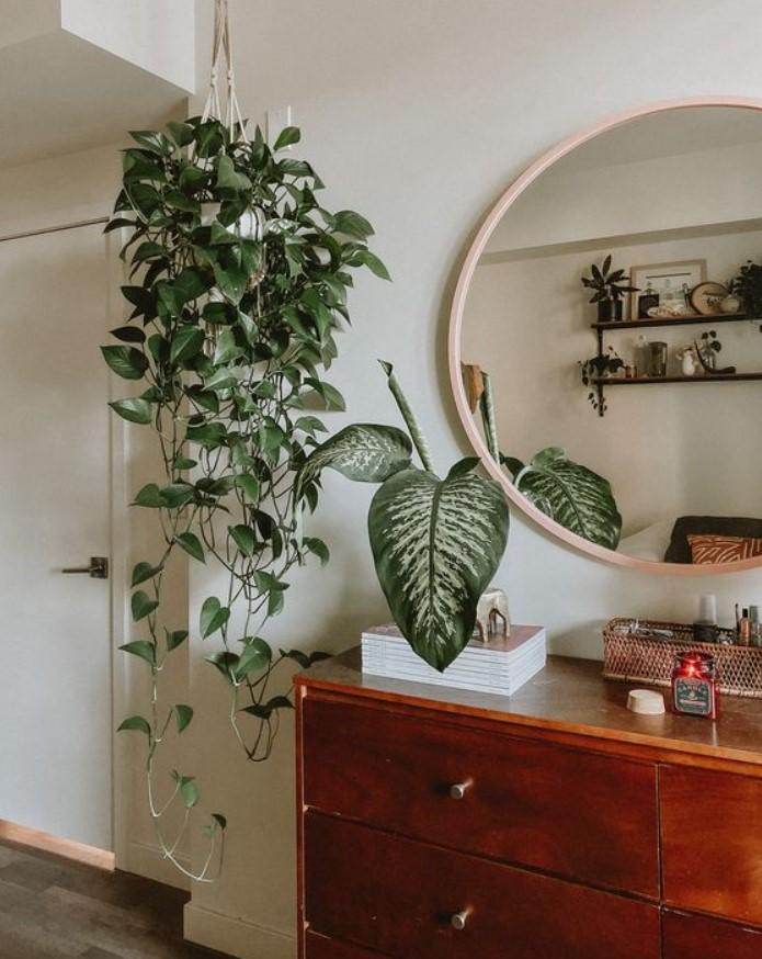 αναρριχόμενο φυτό εσωτερικού χώρου